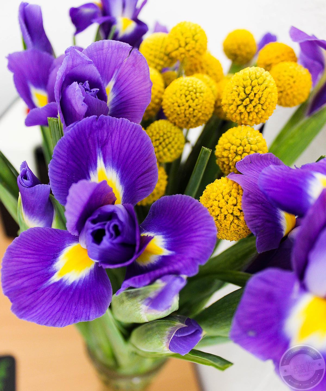 bloomy-days-9 Eine blumige Überraschung mit Bloomy Days. | Werbung