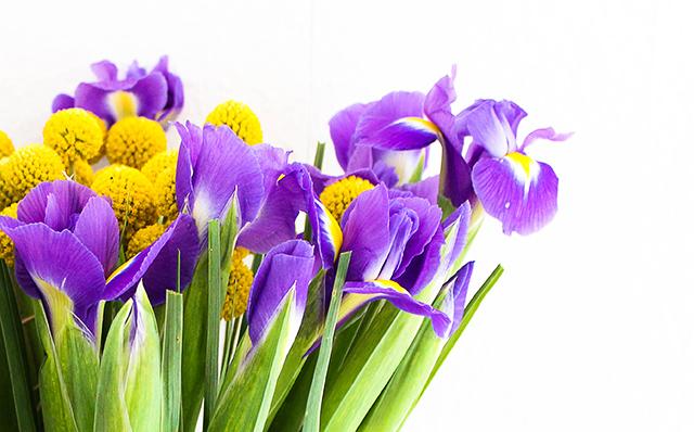 bloomy-days-thumb Eine blumige Überraschung mit Bloomy Days. | Werbung