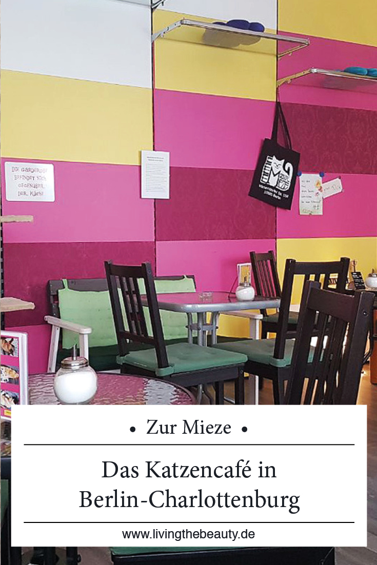 Zur Mieze - Das Katzencafé in Berlin Charlottenburg