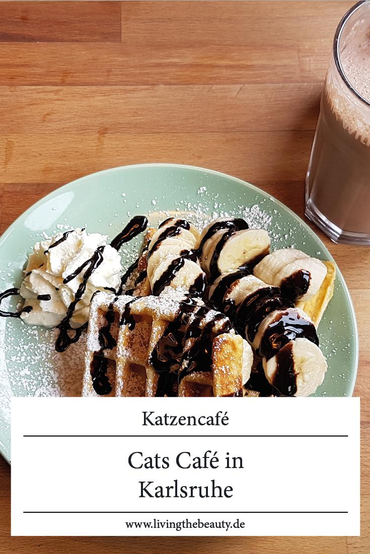 Cats Café | Das Katzencafé in Karlsruhe
